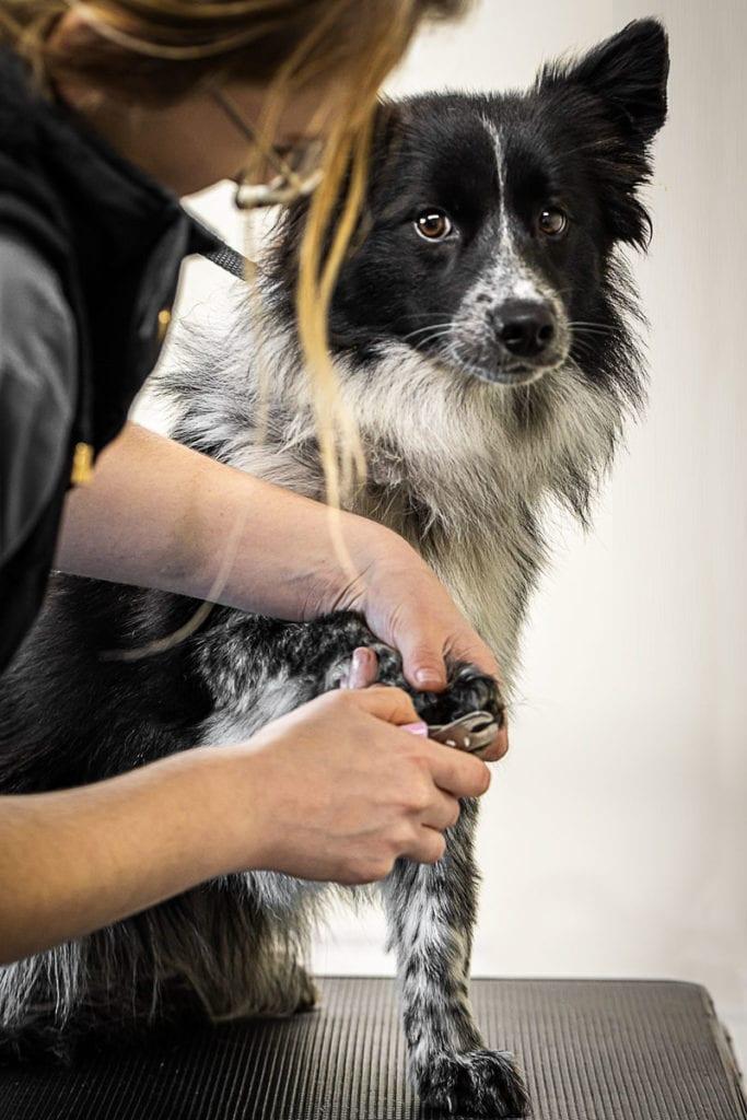Hamilton Hounds - Dog Grooming